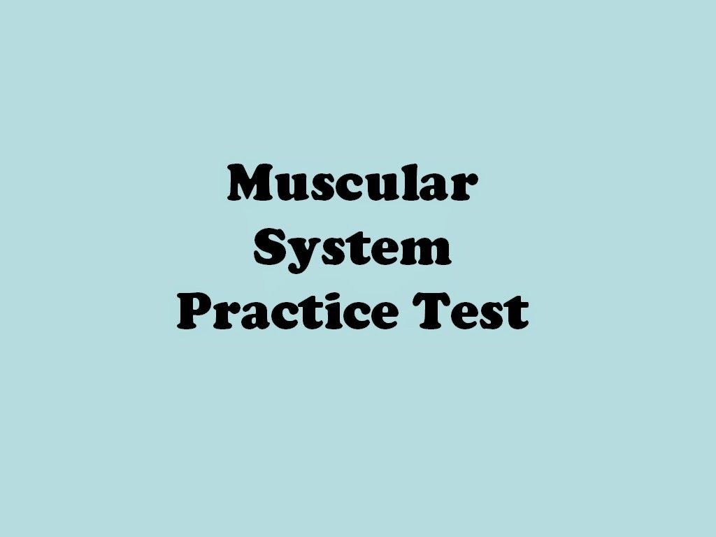 Muscular System Practice Test Medical Terminology