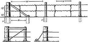 Image result for espalier wire trellis (With images