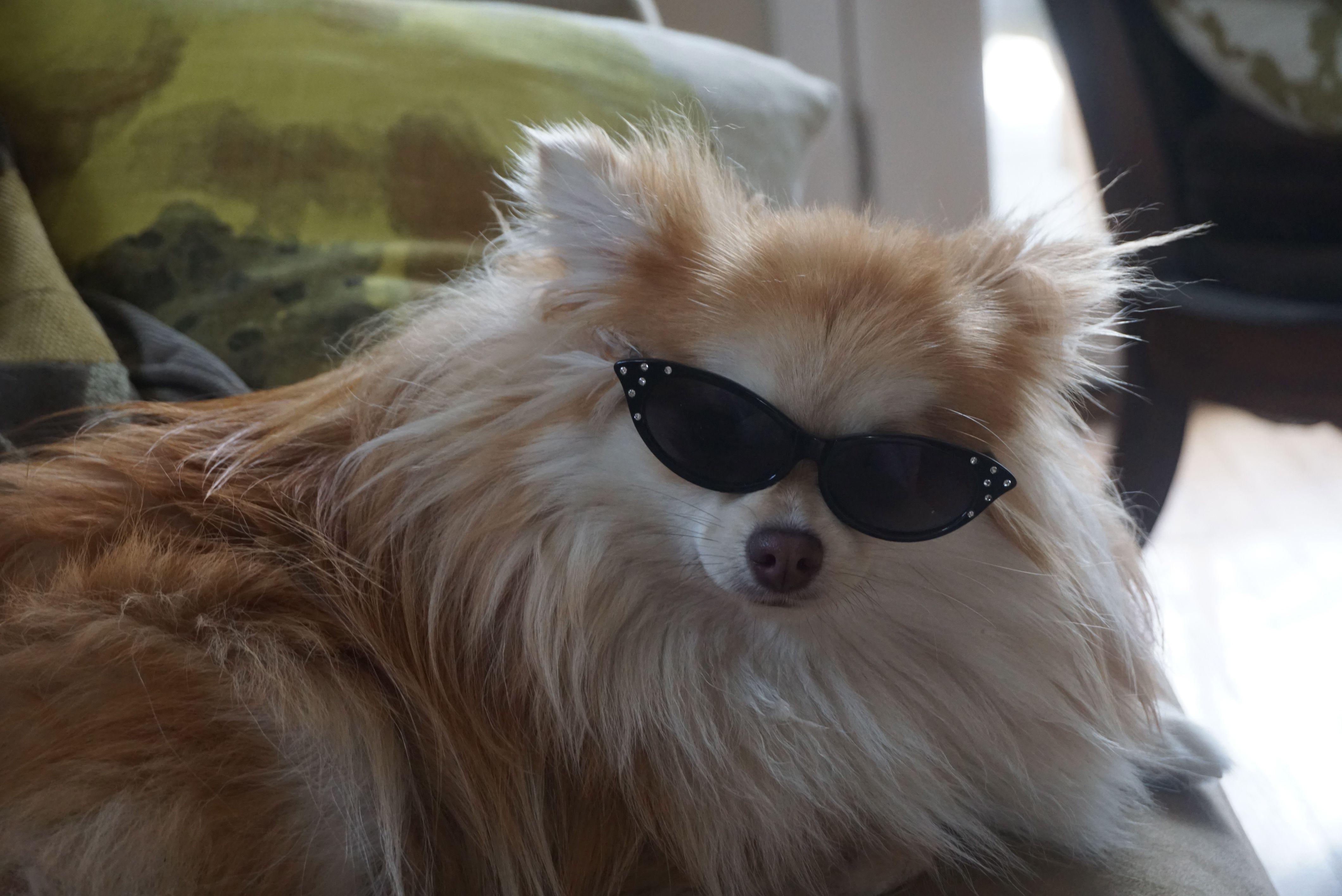 Corgi Puppies For Sale Ohio Craigslist Ideas