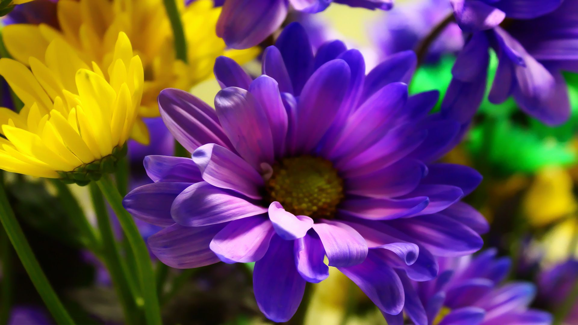 Purple yellow flowers Wallpapers Pictures Photos Images