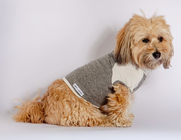 DOG & CO.   Cheeky the Dog in the PENN + POOCH Babe TShirt