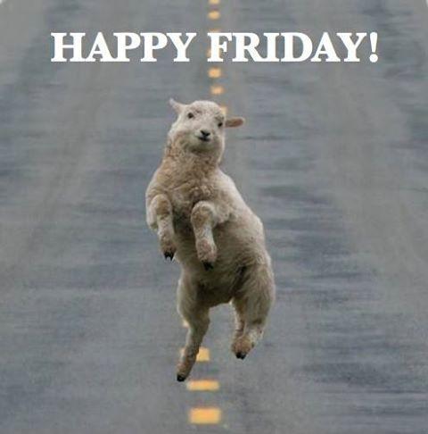 #fridayfeeling #sheepjumping