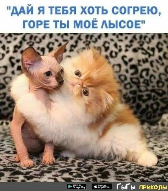Ещё больше смешных животных!