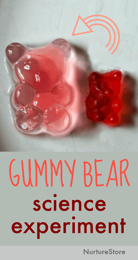 Growing gummy bear science experiment to show osmosis - NurtureStore