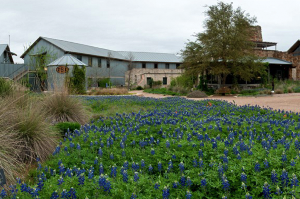 Best Places To See Bluebonnets In Austin Thingstodo Things To - 11 things to see and do in austin texas
