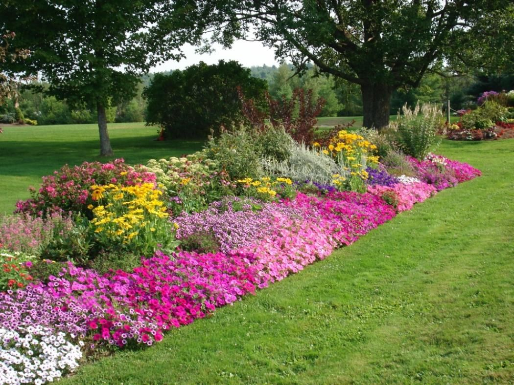 Chic pink and yellow flower bed ideas for great landscape for Best plants for front flower bed