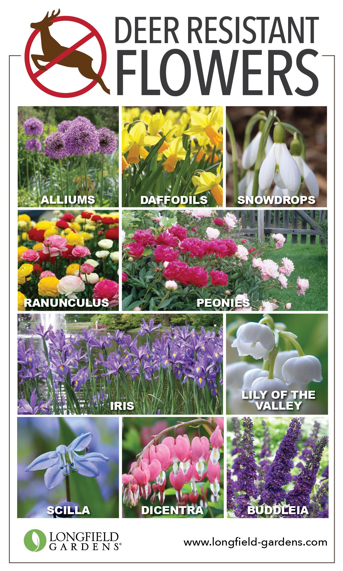Deer Resistant Bulbs And Perennials Flowersdeer
