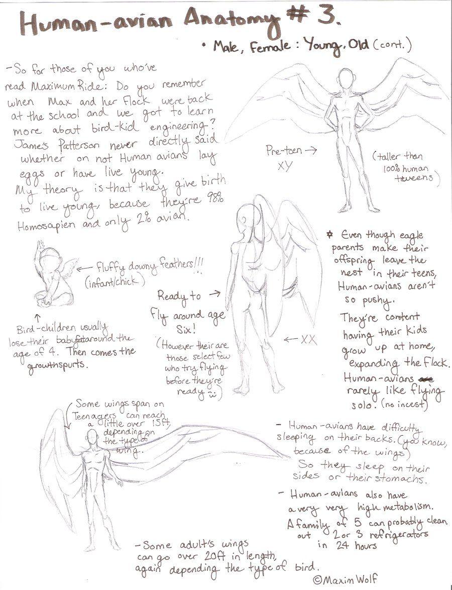Human Avian Anatomy No3 By Maximwolfiantart On Deviantart
