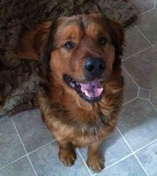 Adopt Mason On Dogs Golden Retriever Golden Retriever Mix Best