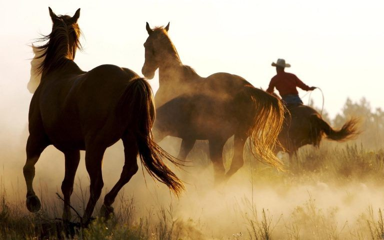 Country Desktop Wallpapers Horses Horse Background Cowboy Pictures