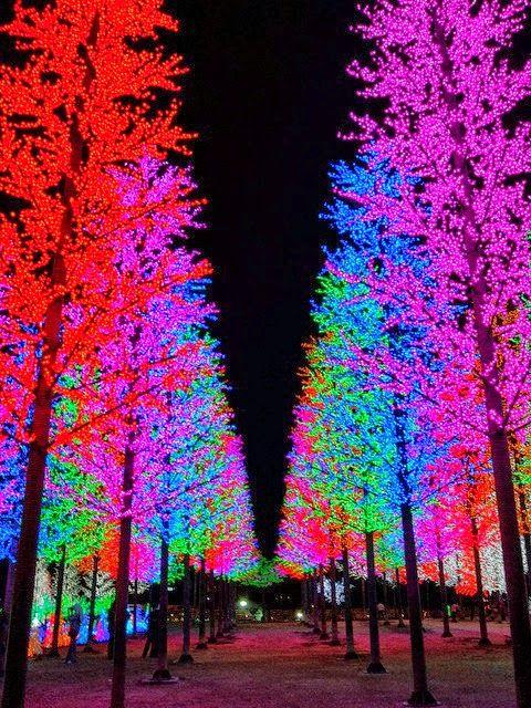 lights Christmas Pinterest Lights, Christmas lights and Holidays