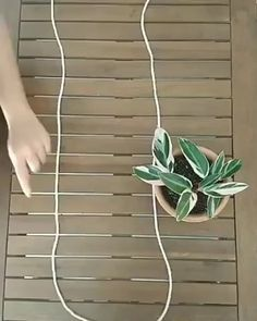 Using spare string to hang a plant...