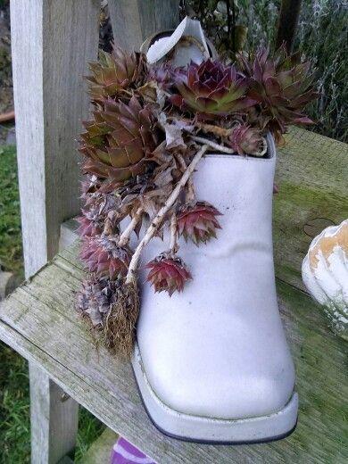 Ein paar alte silberne schuhe mit haus wurz bepflanzt man sollte alte sachen nicht immer - Silberhochzeit deko garten ...