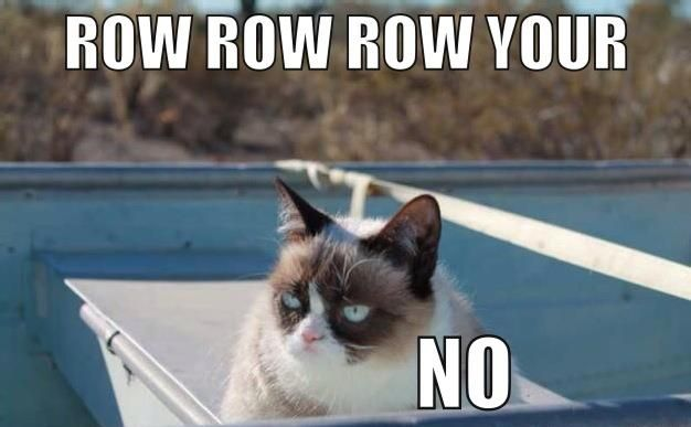 Grumpy Cat experiences the joy of boating