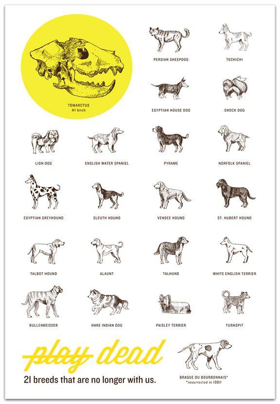 Pin On Doggies D