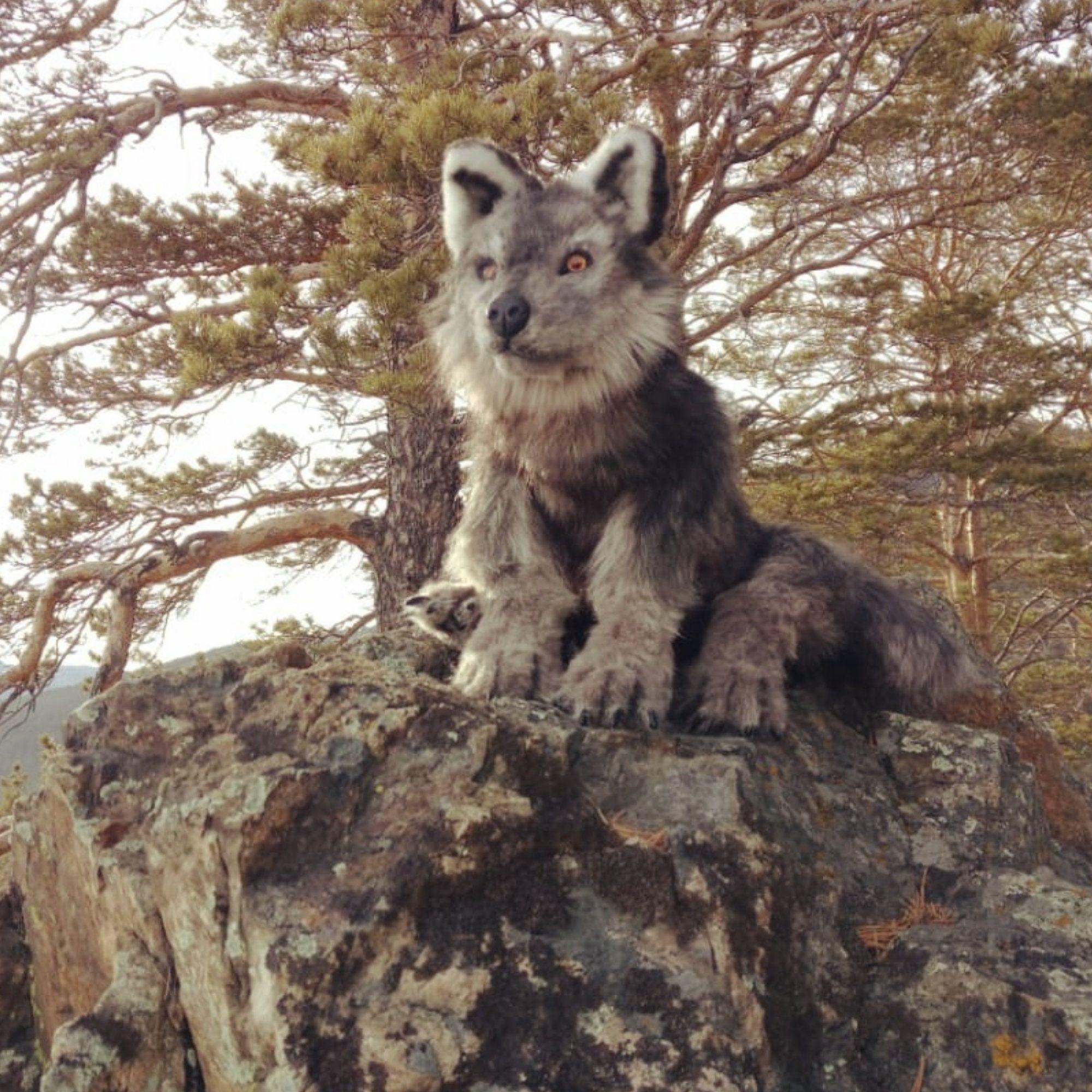Realistic stuffed animals. Posable wolf. Stuffed wolf