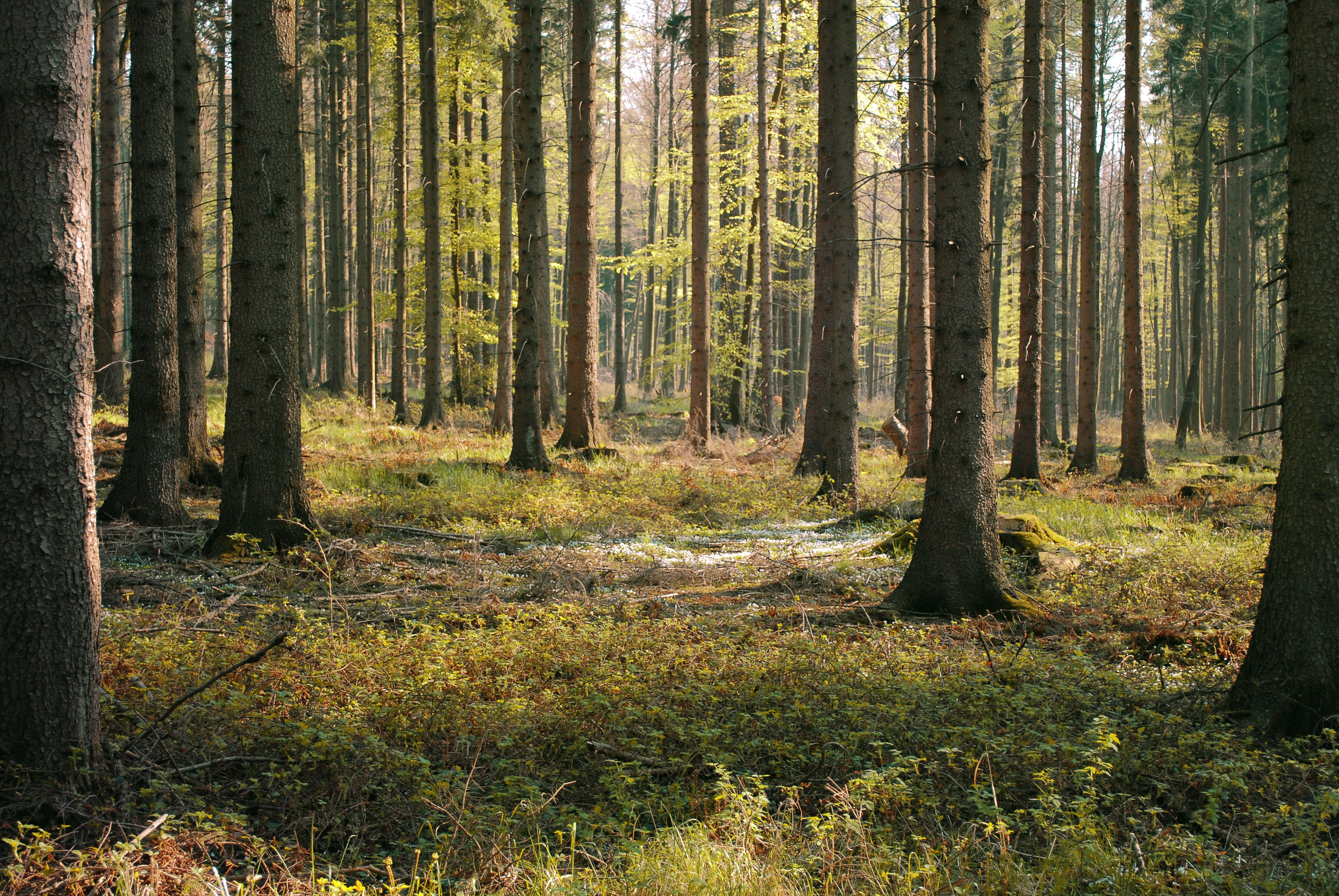 Sherwood Forest: a story alluring mystery