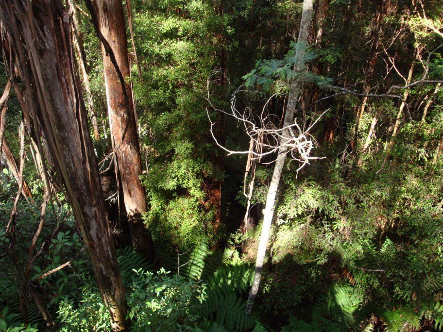 Dip River Forest Reserve Tasmania