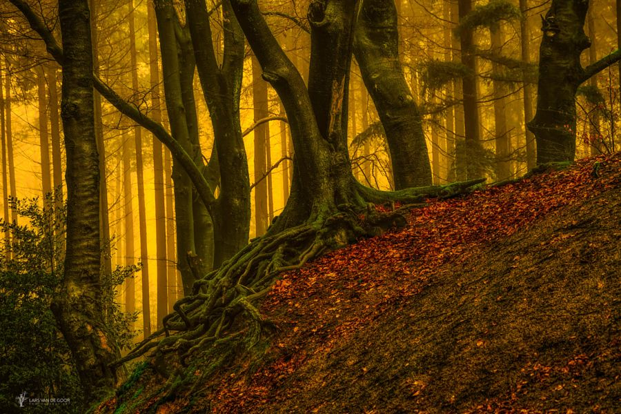 Rooted and Twined by Lars van de Goor - Photo 158533241 - 500px