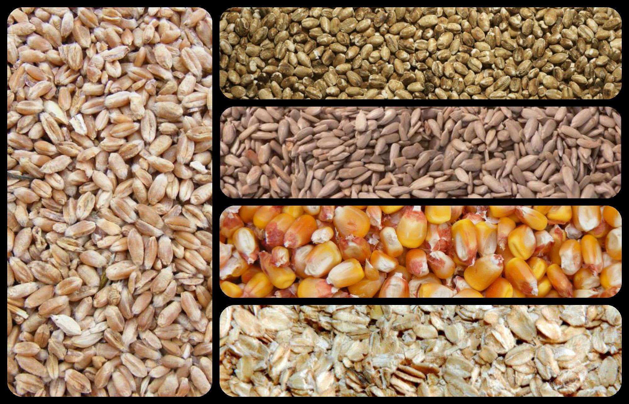 http://receitaspadaria.wordpress.com/category/alfabeto-da-padaria/escolha-a-farinha-certa/  Do trigo aos cereais, existem diversos tipos farinhas que tornam o pão num alimento mais do que especial. Conheça melhor as características de cada destas farinhas e diga-nos qual a sua preferida.