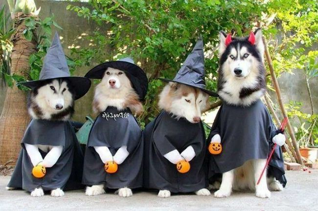 Choose Your Favorite Funny Dog S Customs For Halloween Dog