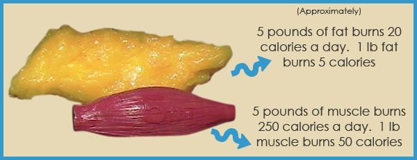#TuesdayTip: 5 lbs of #fat vs #muslces. 1lb fat = 5 calories burned 1lb  muscle = 50 calories burned. #learnmore #fitness #calories #burncalories  #fitness ...