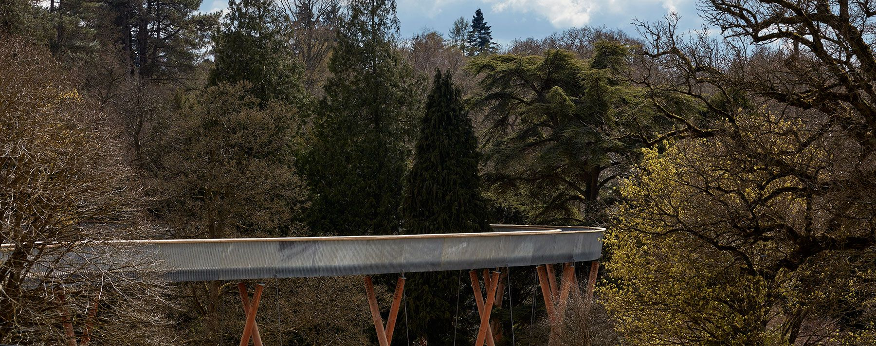 treetop walkway by glenn howells architects winds through westonbirt arboretum all images by rob parrish