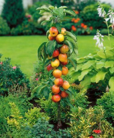 8873dd0c6fb2ef94313af64ad7438ccb - Columnar Fruit Trees For Small Gardens