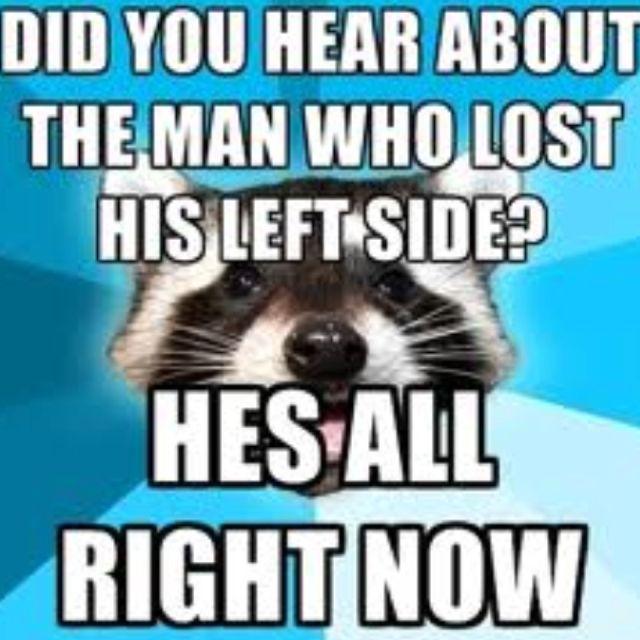 lame pun raccoon meme | Things for My Wall | Pinterest | Meme