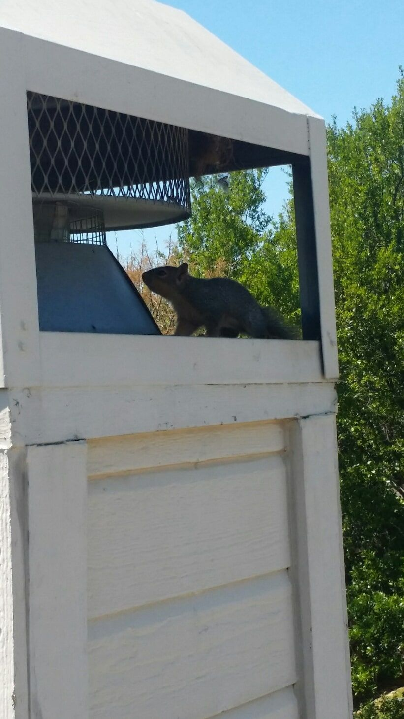 Wildlife Removal Services Houston In 2020 Removal Services How To Remove Wildlife