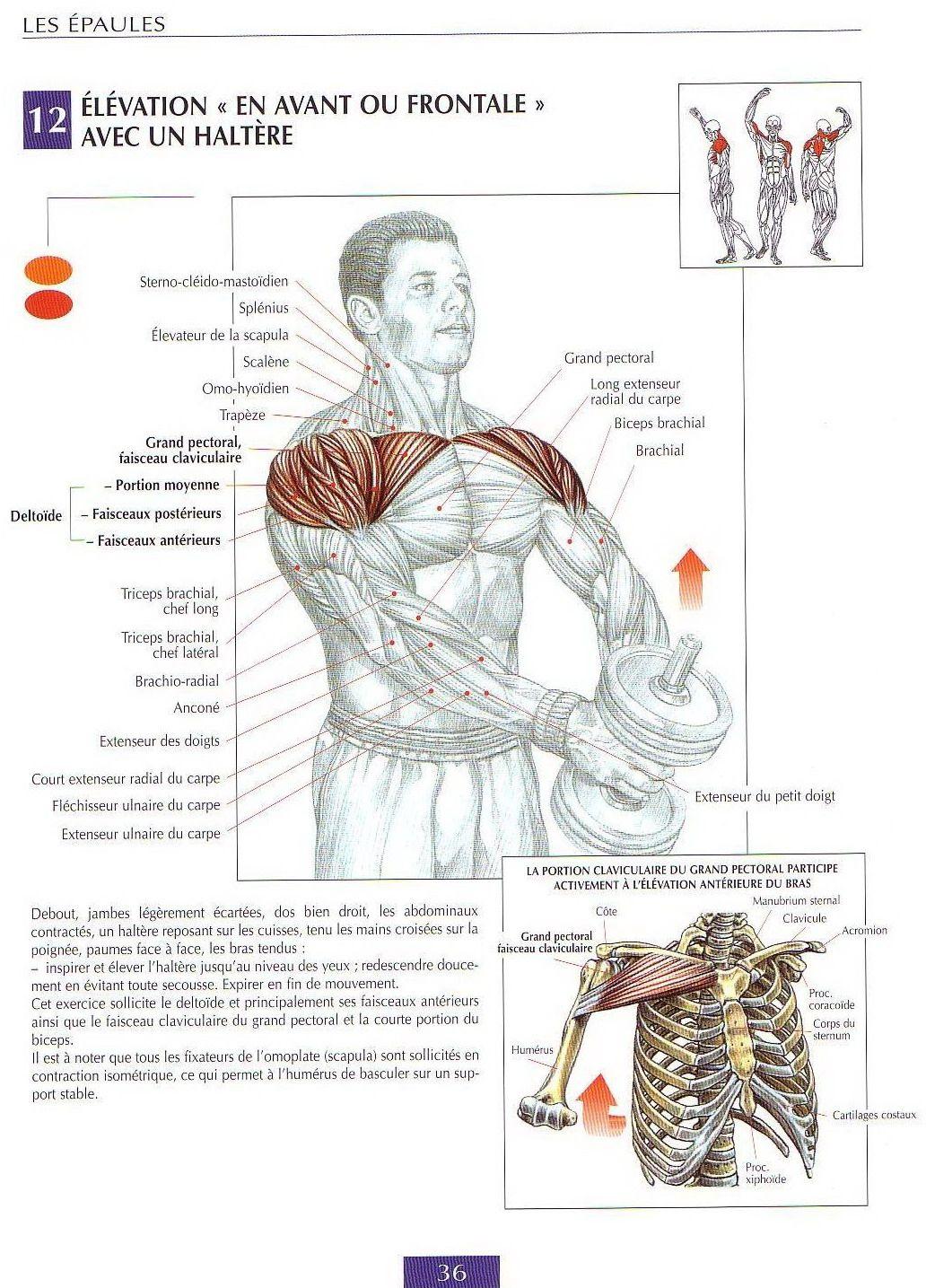 Page+036.jpg 1 032 × 1 435 pixels | Exercice musculation, Musculation prise de masse, Fitness et ...