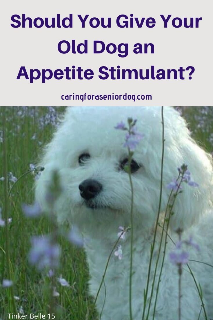 Should You Give Your Old Dog An Appetite Stimulant Old Dogs Senior Dogs Care Dogs