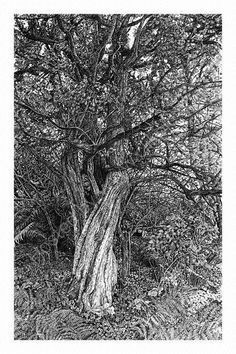 Sarah Woolfenden's pen drawings have amazing texture and detail