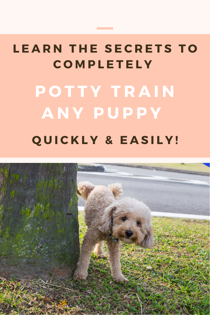 Potty Train Your Puppy Quickly Easily In 2020 Potty Training Puppy Training Your Puppy Puppies