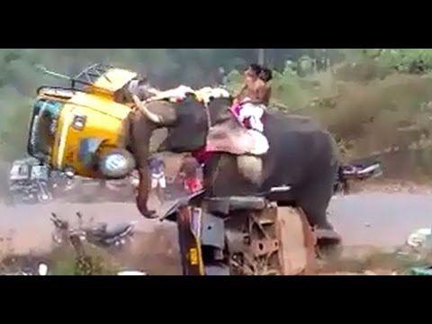 Angry Elephant Attack In Palakkad Kerala India Damaging 27
