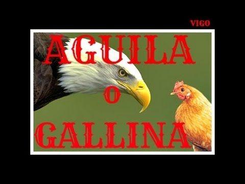 Águila o Gallina - Exelente Audiolibro :: Lern Born - YouTube