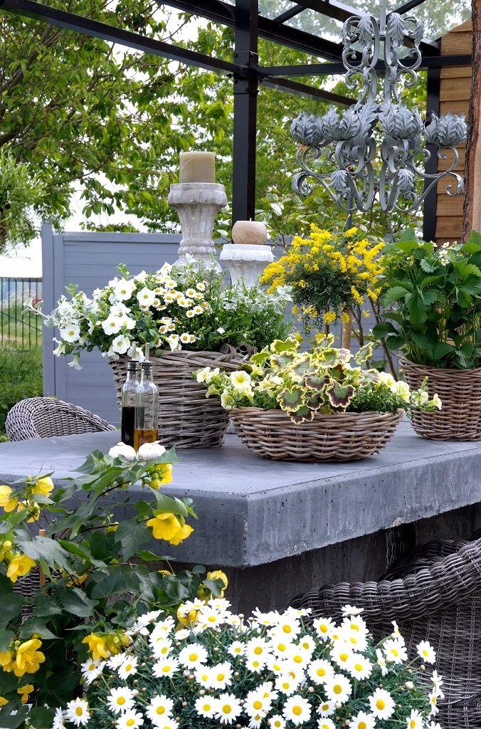 Pin de sentimentaljunkie en contained gardening Pinterest Hongos