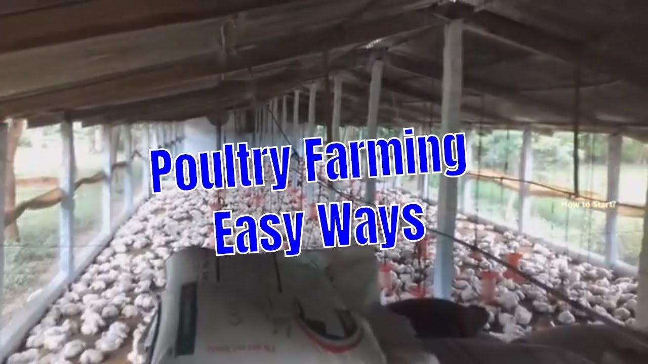 Broiler Poultry Farming Method with Project Report