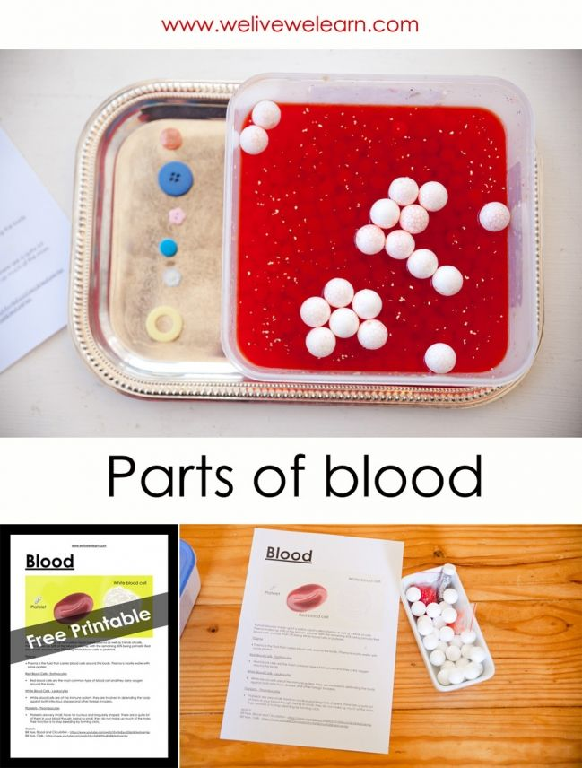 Parts of the Blood lesson with edible ingredients. Learn about ...