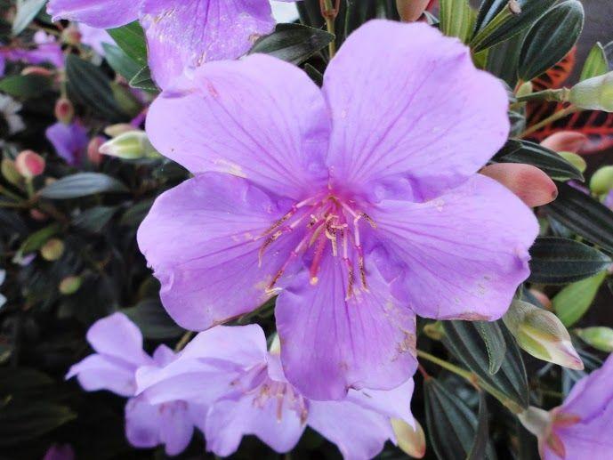 """Un fiore """"semplice"""" ma dal colore meraviglioso!"""