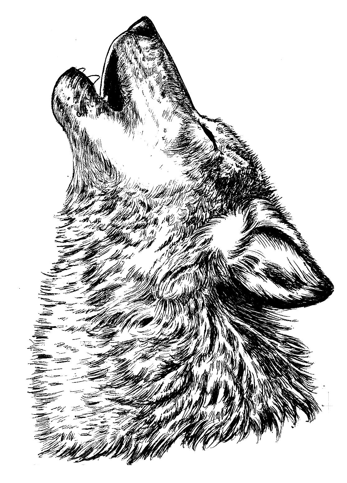 Картинка для выжигания волк воет на луну