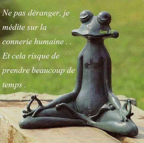Meditation Sur La Connerie Humaine Citation Humour Citation