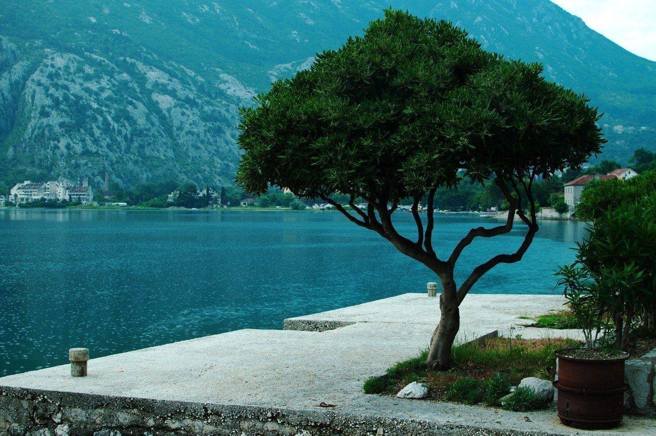 нашей черногорская будва и ее деревья фото обычно начинала