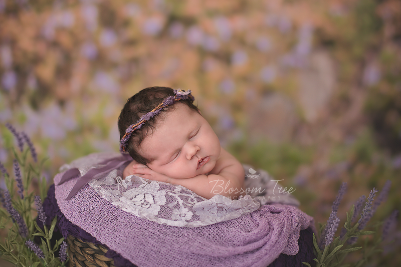 Newborn photography outdoor newborn photography image by blossom tree photography australia captured