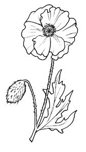 Znalezione Obrazy Dla Zapytania Mak Polny Rysunek Drawings Flower Pictures Home Decor Decals