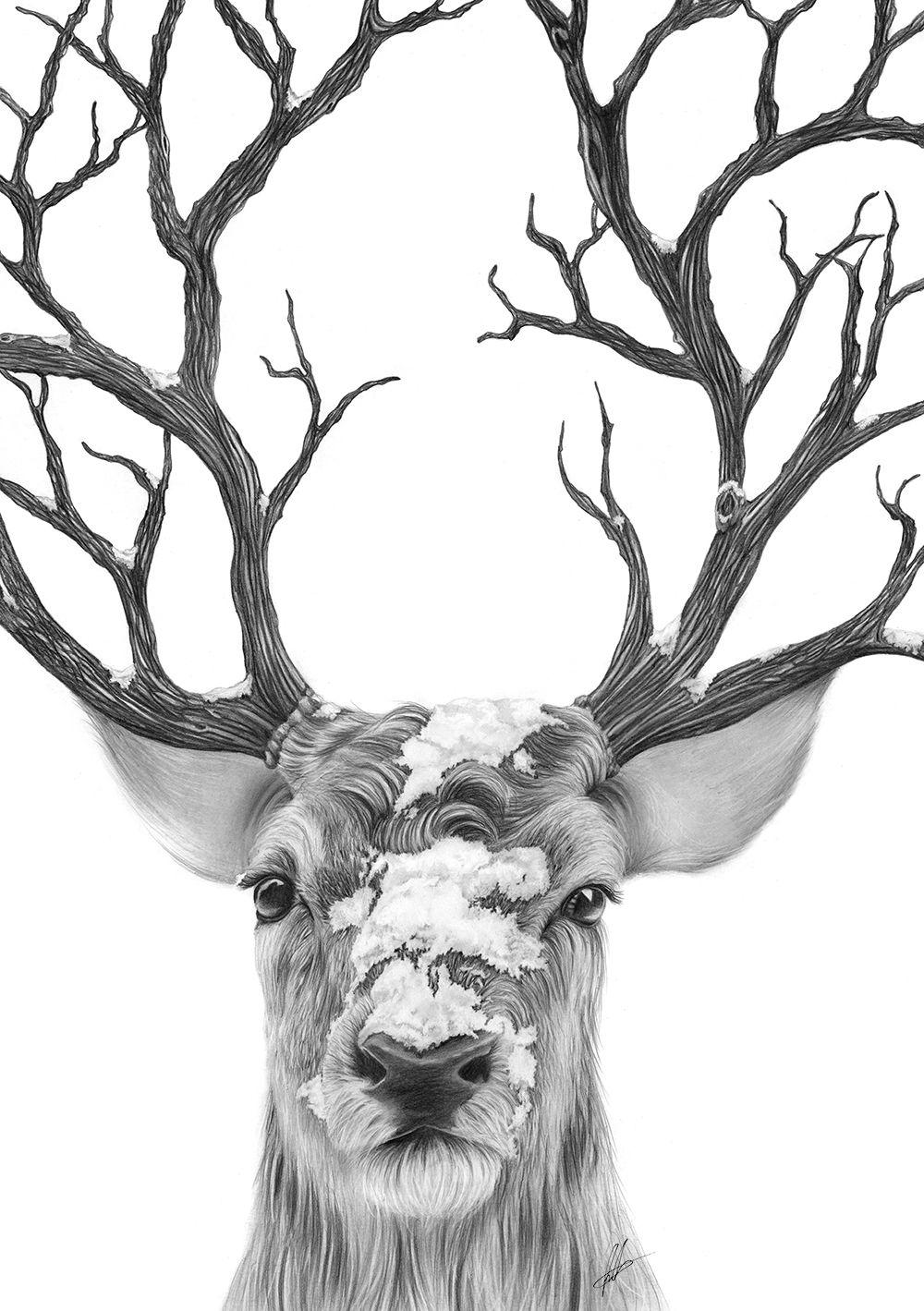 big buck antlers hunting illustration, hand drawn | fairytalebook
