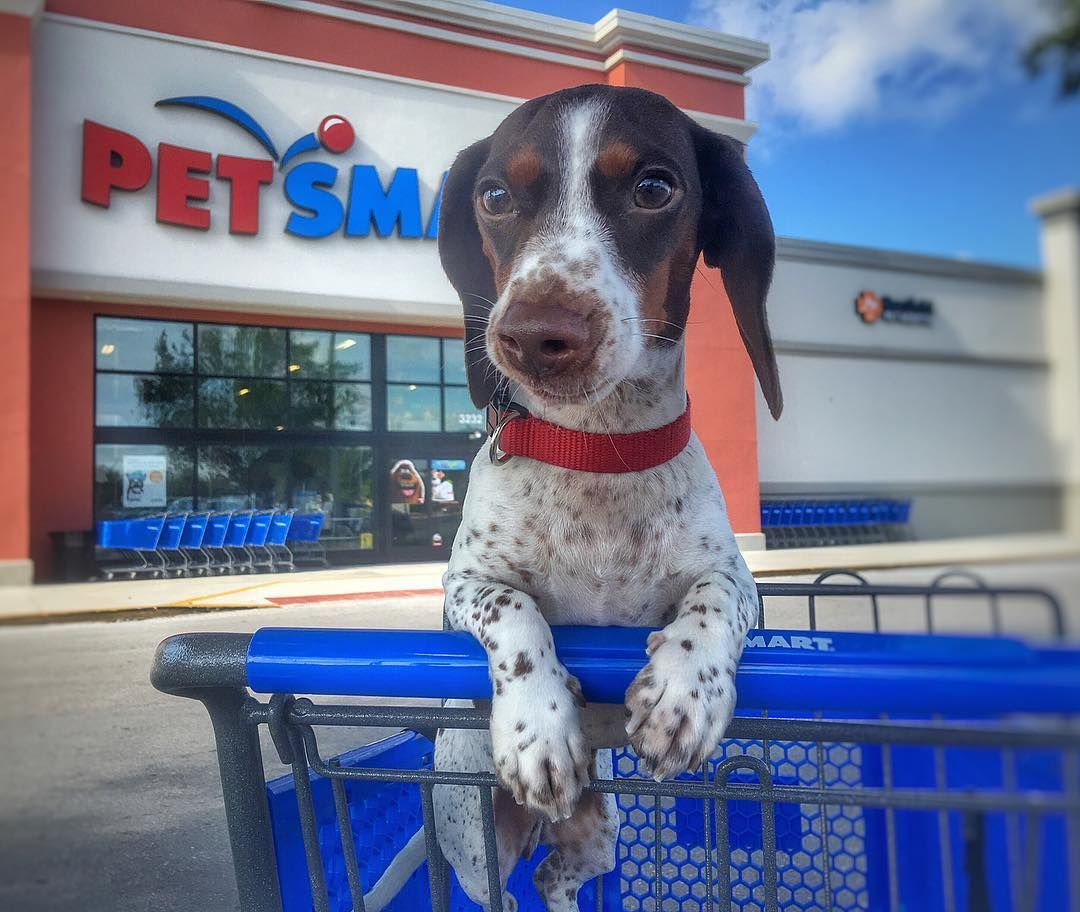 Petsmart Memphis Wolfchase Pet Store Dog Daycare Dog Friends