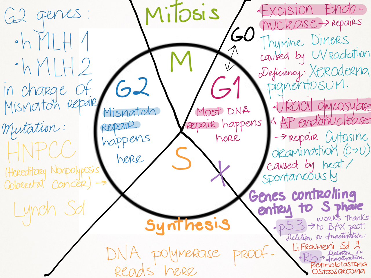 My Notes For Usmle Biology Lessons Dna Activities Teaching Biology [ 960 x 1280 Pixel ]
