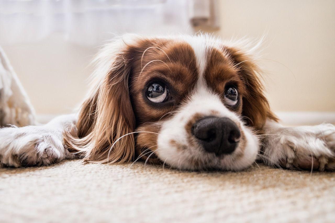 dog lying down on floor