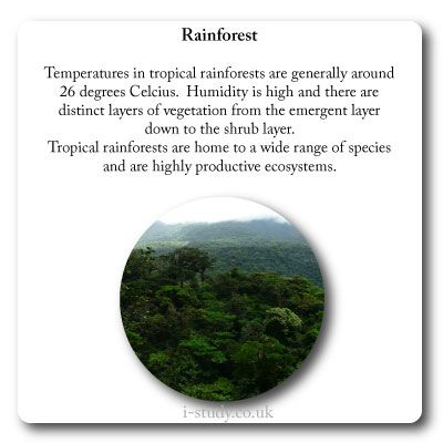 tropical rainforest characteristics | IB Environmental Systems and ...